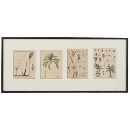 120 - Property of a lady - four monochrome botanical prints, in single glazed frame (see illustration)....