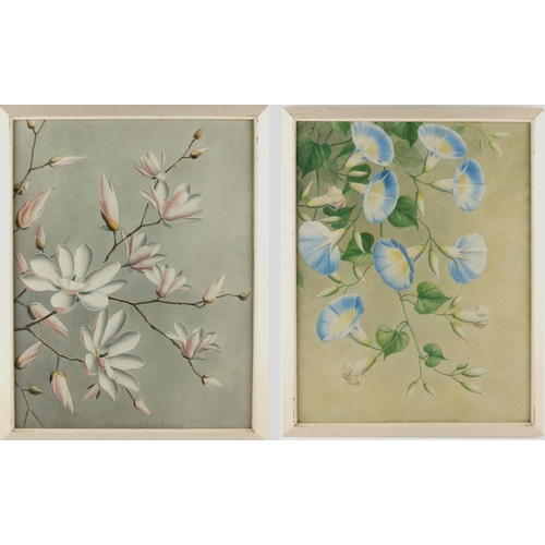 10 - Property of a lady - Thakar Ganga Singh (Indian, 1895-1970) - 'IPOMOEA RUBROCERULEA HOOK' and 'MAGNO...