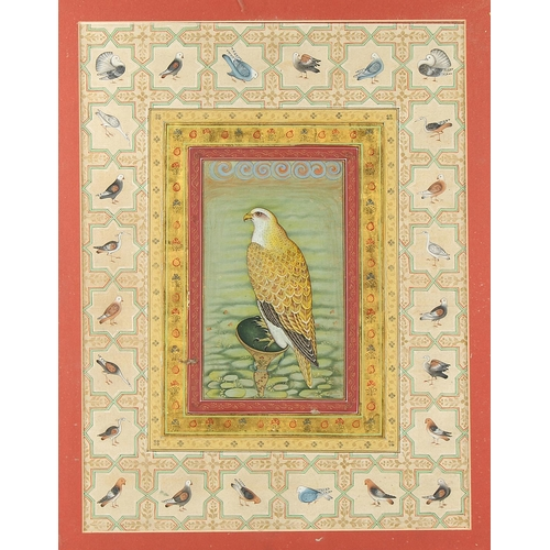 6 - Property of a gentleman - an Indian school watercolour with gum arabic heightening depicting a falco...
