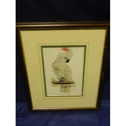 435 - Framed print of salmon crested cockatoo...