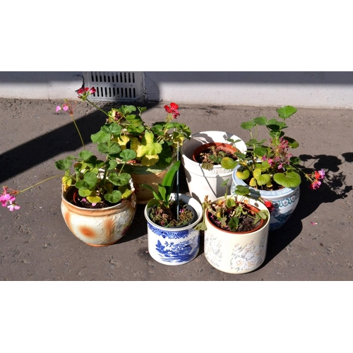 29P - Six ceramic and terracotta planters including plants. 1 oriental design, 1 blue and white willow pat...