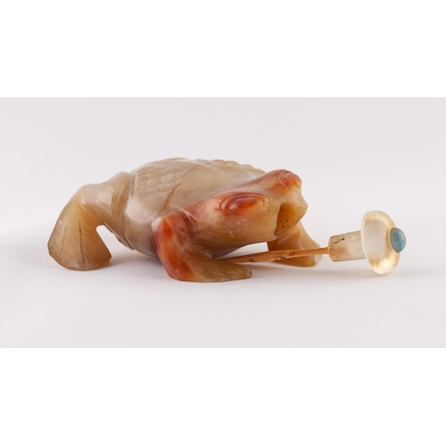 28 - A CHINESE LATE QING/REPUBLICAN PERIOD CARVED AGATE SNUFF BOTTLE IN THE FORM OF A FROG, the stopper w...