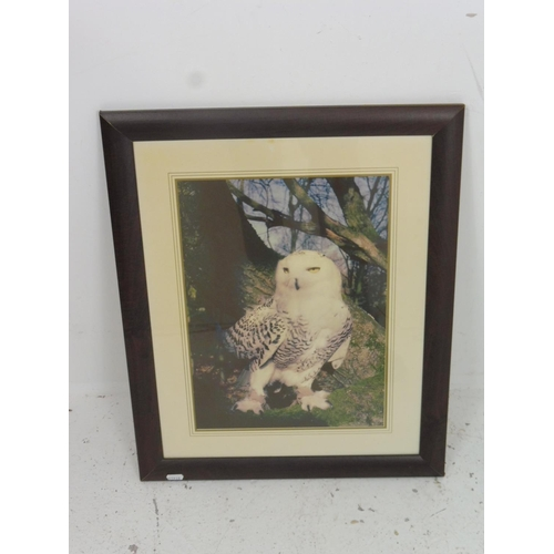 4 - Framed Wall hanging Photograph of Arctic Snowy Owl 22.5