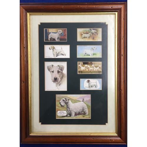20 - A framed set of six cigarette cards depicting the Lakeland Terrier, together with another framed set...