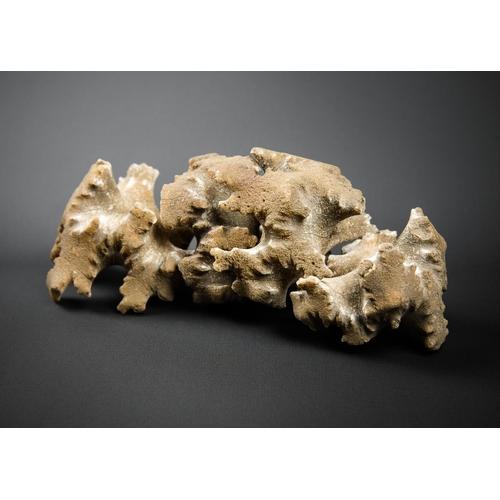 3 - UNUSUAL FOSSILISED AMMONITE CHAMBERS 65-250 million years old....