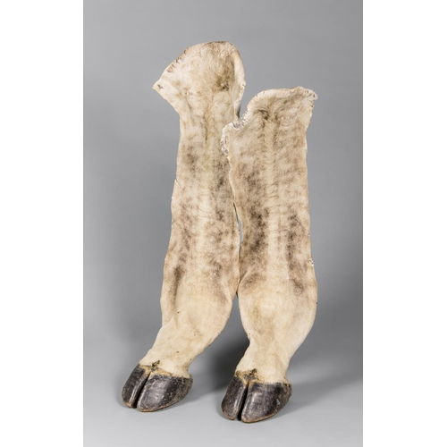 32 - AN UNUSUAL PAIR OF TAXIDERMY GIRAFFE HOOVES WITH LEG SKIN ATTACHED. Namibia October 2006. Taxidermis...