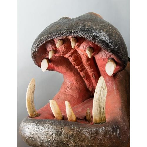 44 - A LARGE AND IMPRESSIVE TAXIDERMY HIPPOPOTAMUS SHOULDER MOUNT. Zimbabwe, May 2007. (h 110cm x w 80cm ...