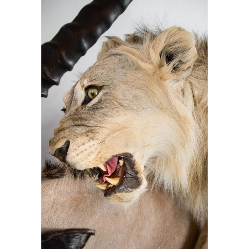 49 - A MAGNIFICENT TAXIDERMY DIORAMA OF A MALE LION ATTACKING AN ORYX. Namibia 21/09/2008. Taxidermist Ny...