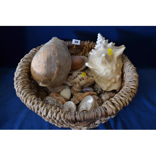 38 - QUANTITY OF SEA SHELLS IN BASKET...