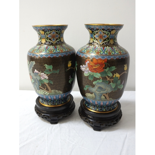 251 - PAIR OF CHINESE CLOISONNE VASES with a black ground decorated with birds of paradise and flowers, on...