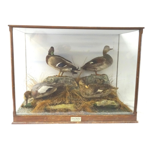 456 - TAXIDERMY STUDY OF FOUR DUCKS in a naturalistic setting glass case, bearing a label 'A stalk at Trom...