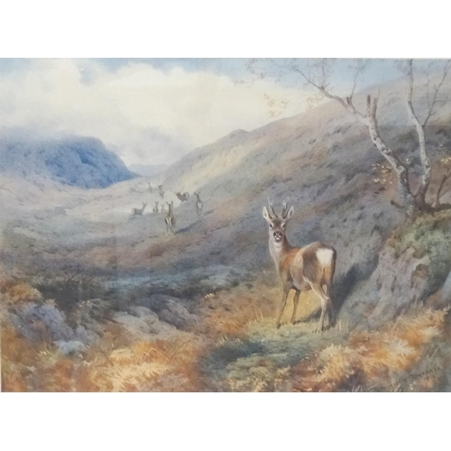 475 - ARCHIBALD THORBURN Overlooked Roe deer, limited edition print 424/500, label to verso, 38.5cm x 50.5...