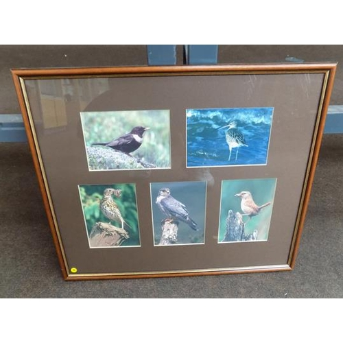 38 - Framed wild birds prints by Mark Hamblin - 16 3/4 inches by 14 1/4 inches...