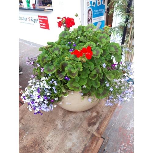 28 - A GOOD QUALITY GLAZED GARDEN PLANTER CONTAINING A GERANIUM PLANT...