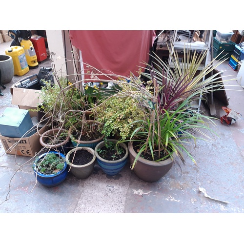 45a - A SELECTION OF PLANT POTS CONTAINING VARIOUS PLANTS, FLOWERS AND SHRUBS TO INCLUDE DAFFODILS, SCENTE...