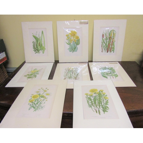 58 - Set of Eight Antique Coloured Engravings Botanical Interest Each Approximately 12 Inches High x 8 In...