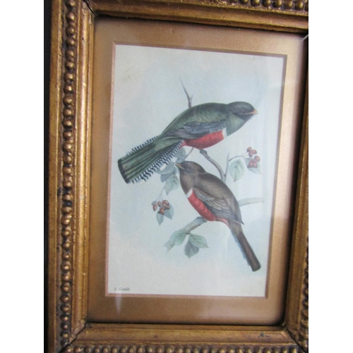 18 - James Gould Lithograph Two Birds Contained Within Gilded Frame Image Size Approximately 8 Inches Hig...