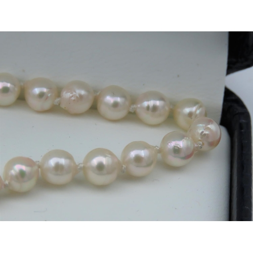 34 - Ladies Pearl Necklace of Attractive Hue with 9 Carat Yellow Gold Clasp