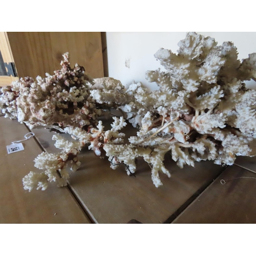 34 - Collection of Antique Coral and Sandstone Largest Piece 10 Inches Long