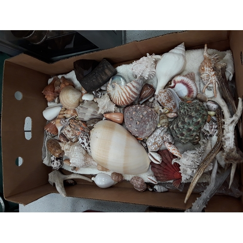 972 - A box of sea shells and deer horns....