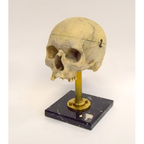 33 - Human medical skull on marble/brass stand....