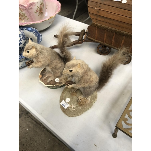 491 - TWO TAXIDERMY MODELS OF SQUIRRELS HOLDING PINE CONES (2)...