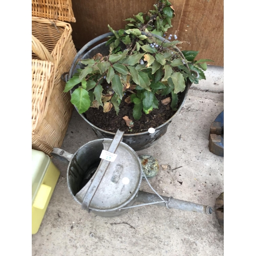 17 - A VINTAGE METAL BUCKET (PLANTED) AND A VINTAGE WATERING CAN...