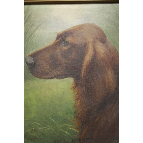 56 - HENRY CROWTHER (1800-1900). Study of a Red Setter with long grasses in background 'Maesbury Sultan',...
