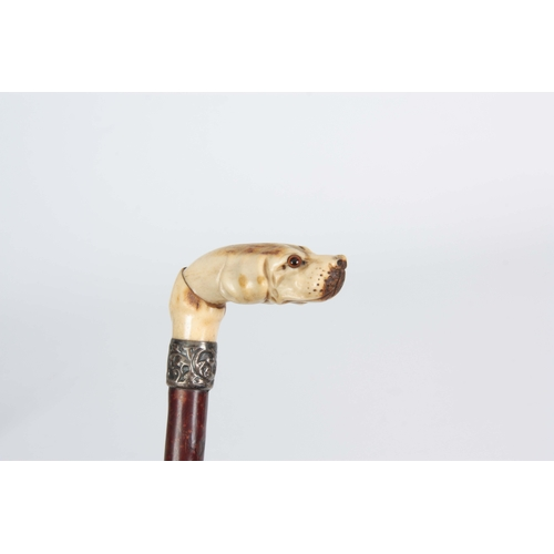 470 - A LATE 19TH CENTURY CARVED IVORY WALKING CANE depicting a dog with a rococo brass collar and branchw...