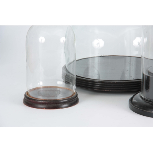 511 - A COLLECTION OF THREE LATE 19TH CENTURY GLASS DOMES ON EBONISED BASES the taller dome with retailers...