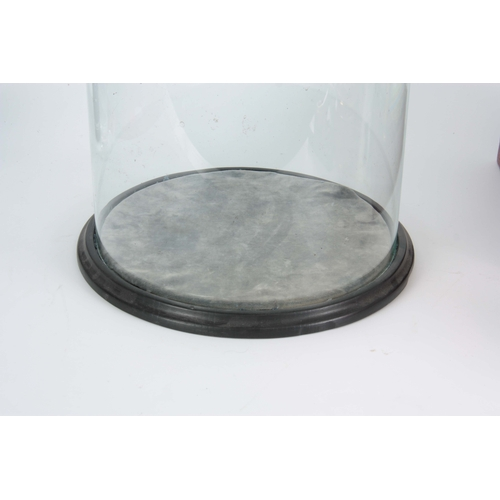 512 - A LARGE LATE 19TH CENTURY CIRCULAR GLASS DOME on velvet-lined turned ebonised base - 76cm high 30cm ...