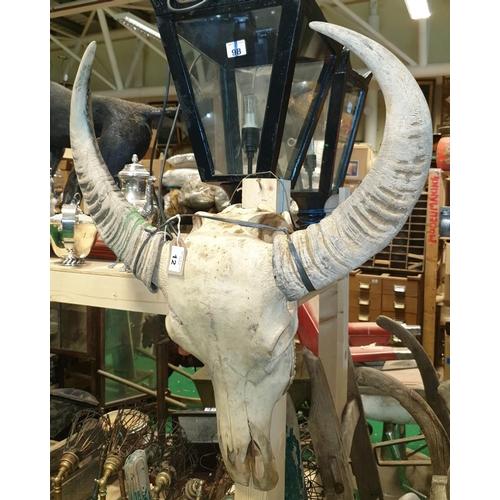 12 - A Taxidermy Skull Head of a Longhorn Cow. (1) (5)....