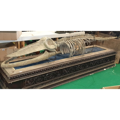 17 - A life size prop of a Dinosaur on a platform base.  L 320 x W 80cm approx.(1) (9)....