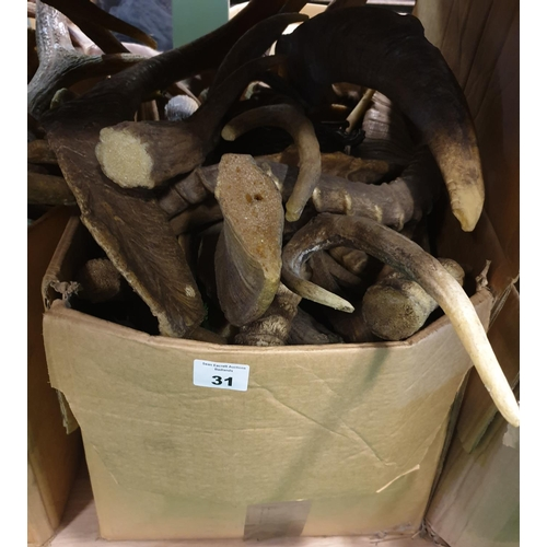 31 - A large quantity of Horns real and props in one box. (Q)...