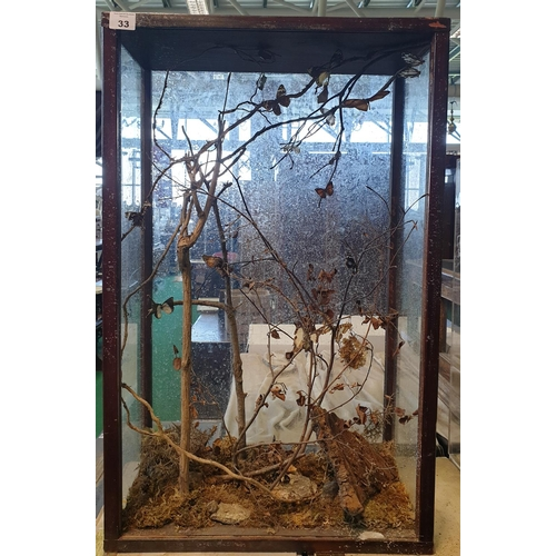 33 - A Taxidermy of Butterflies (cased).  W 52 x D 25 x H 82cm approx.(1)(10)...