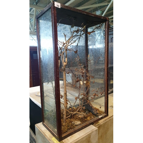 33 - A Taxidermy of Butterflies (cased). (1)(10)...