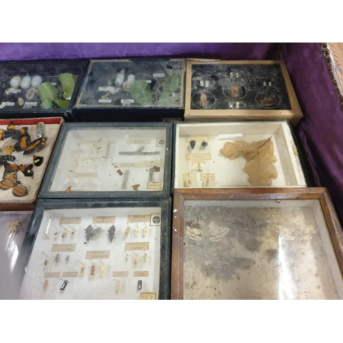 35 - A large quantity of cased Taxidermy/Botany of Moths, Plants etc. (Q)(12)...