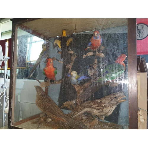 38 - A lovely cased Taxidermy of Birds, parrotts etc. (1) (13/14)....