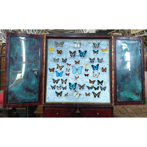 42 - A fantastic cased group of Butterflies.  W 91 x D 31  x H 187cm approx.(1) (15)....