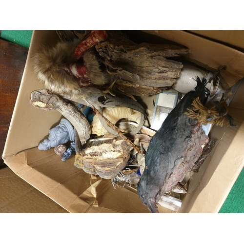 7 - A very large quantity of Taxidermy Items in three boxes. (Q) (2)....