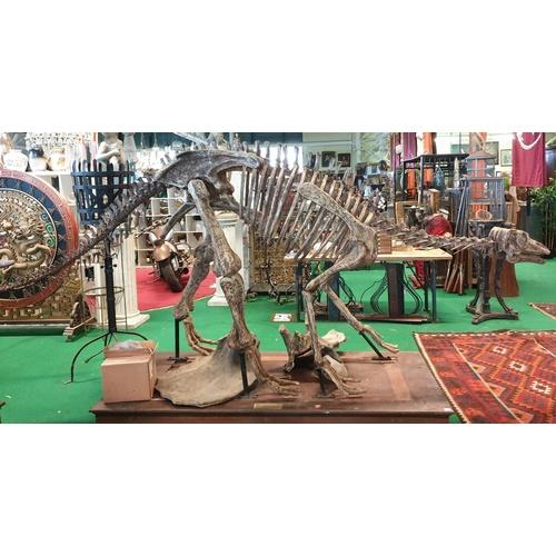 36 - A very large prop of a life size Maiasaura Dinosaur on a plinth base ( Pilgrims Castle). Maiasaura i...