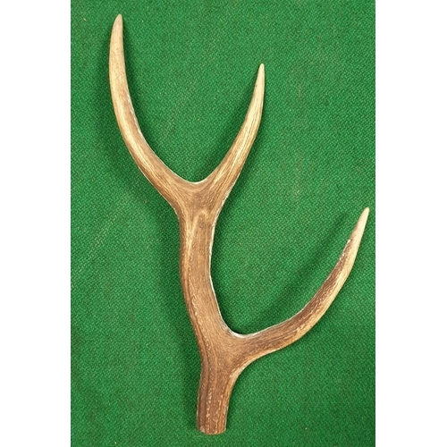 29 - A very large quantity of Antlers (real) along with horns (prop) in one box. (Q)(10)...