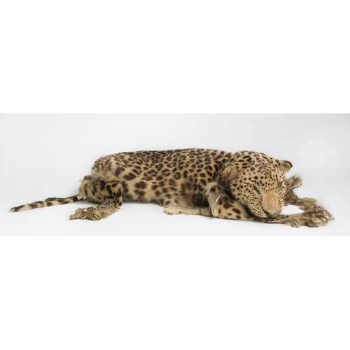 46 - A Taxidermy of a Leopard Skin. L 177cm approx. (1) (19)....