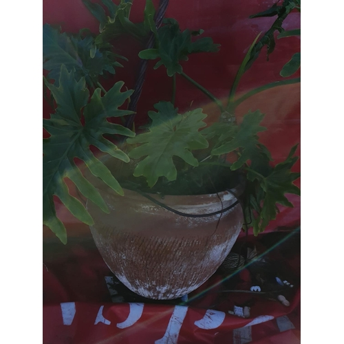 32 - A set of four Terracotta Pots....