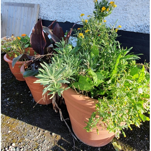 35 - A good quantity of Terracotta style Flower Pots....