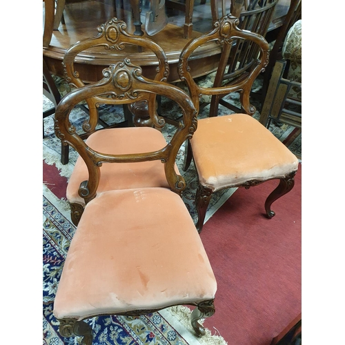 3 - A lovely set of three 19th Century Rosewood Salon Chairs with salmon coloured upholstery along with ...