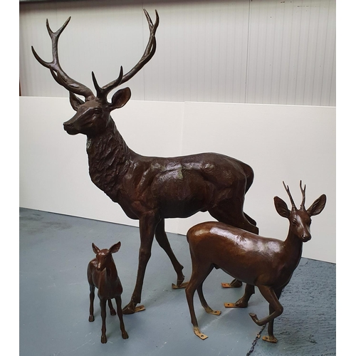 422 - A superb quality life size cast Bronze group, consisting of a Stag, Doe and Fawn.