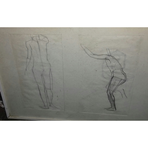 24A - 74 x 25 cm framed and mounted human body pencil studies...
