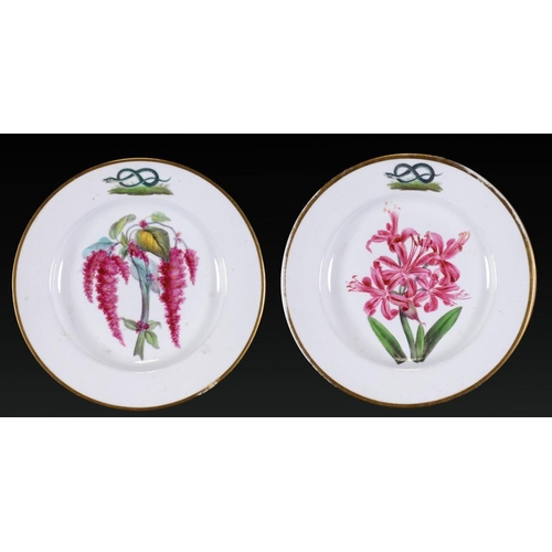 216 - A PAIR OF DERBY CRESTED BOTANICAL PLATES FROM THE DUKE OF DEVONSHIRE SERVICE, C1810-15  painted with...
