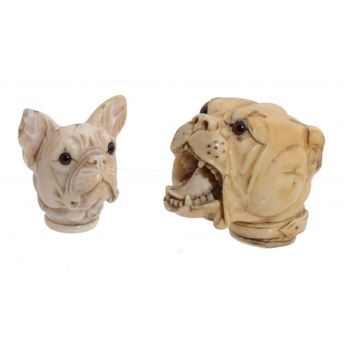 782 - A VICTORIAN IVORY CANE HANDLE CARVED AS THE HEAD OF A MASTIFF,  19TH C with glass eyes, 5.5cm h and ...